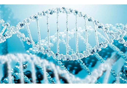ДНК ВПЧ