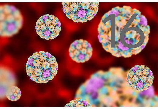 16 тип ВПЧ