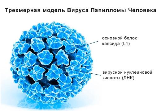 вирус папиллому человека