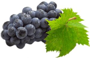 Спелая виноградная лоза с листком картинка