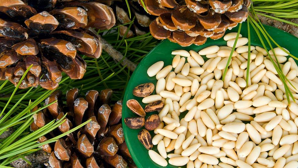 Полезные свойства орехов при давлении