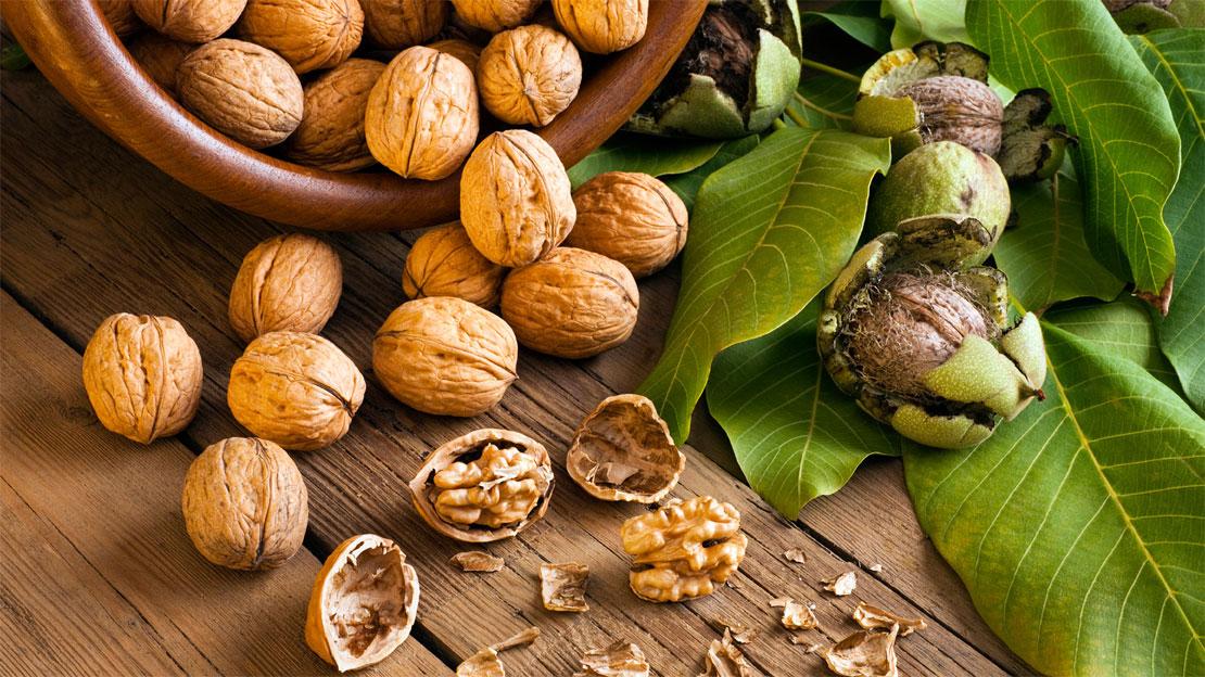 Грецкий орех при заболевании гипертензией