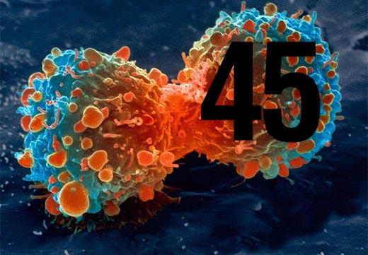 45 штамм ВПЧ