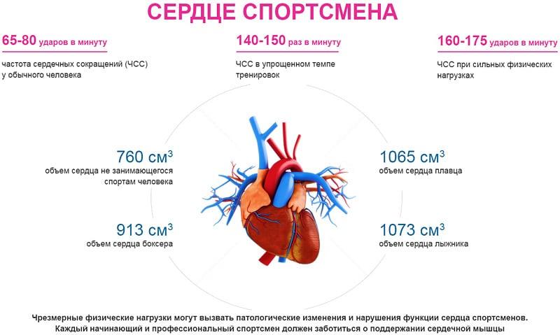Как работает сердце спортсмена