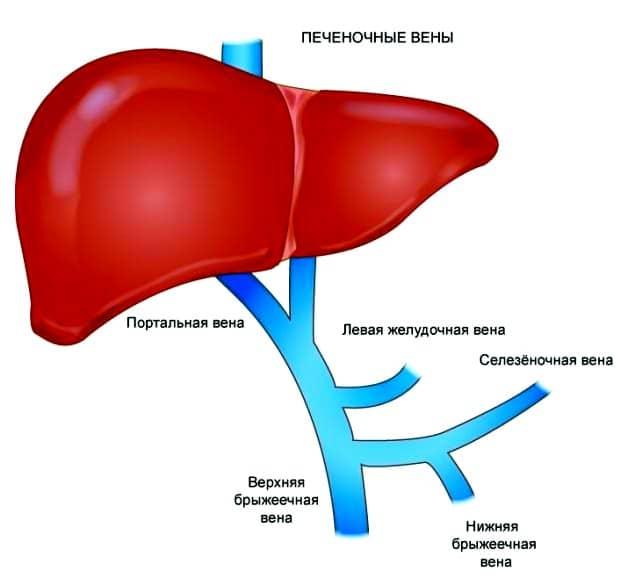 Печеночная артерия